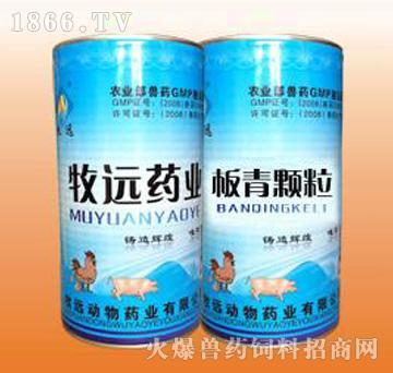 板青颗粒-主治猪高热不退、厌食停食