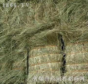 牲畜饲料羊草碱草