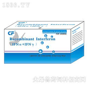 猪(1FNα+IfNγ)基因干扰素-主治猪流行性腹泻、传染性胃肠炎