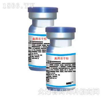 禽用冻干粉-预防新城疫、禽流感、传染性支气管炎、传染性喉气管炎