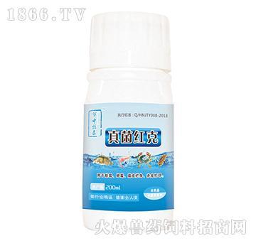 真菌红克-对水产动物体表的水霉,鳃霉有极强的剥离分解作用