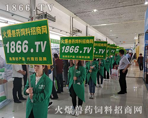 2018山东畜牧饲料展上亮点突显,1866.TV成焦点!