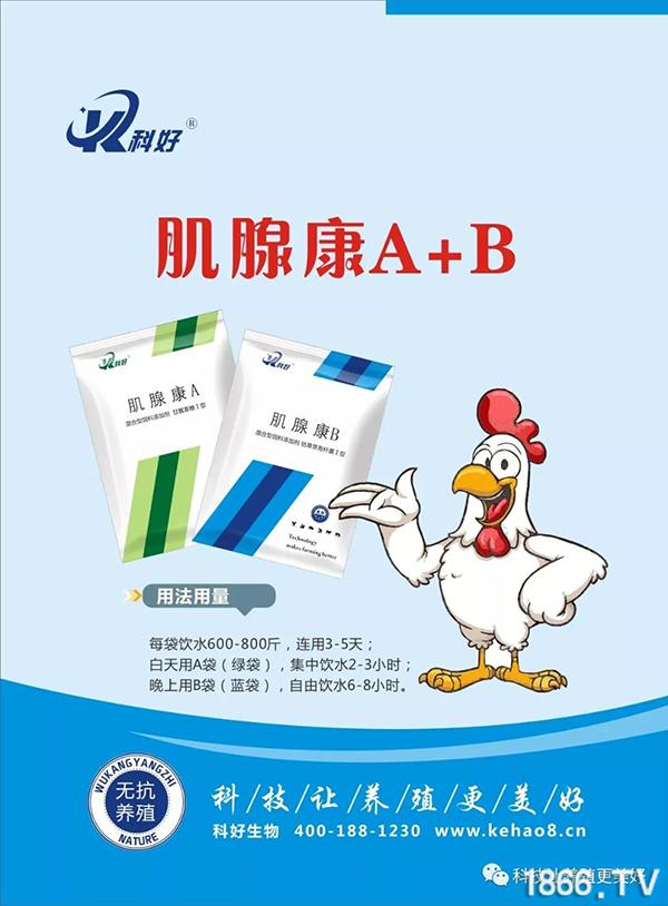 肌腺康A+B-1