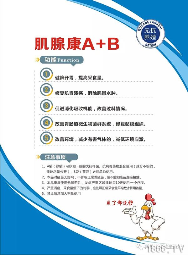 肌腺康A+B-2