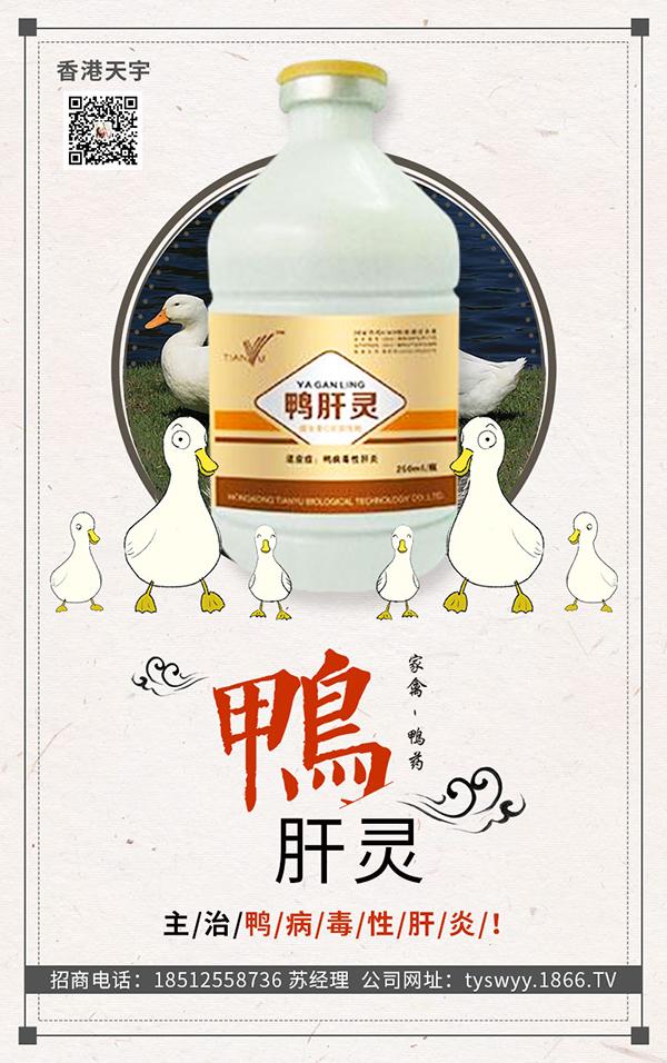 关于鸭病毒性肝炎,你需要了解多少?赶快来看看吧!