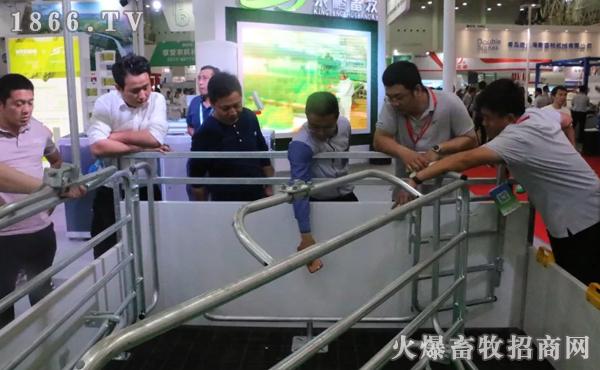客户咨询京鹏母猪福利产床设备
