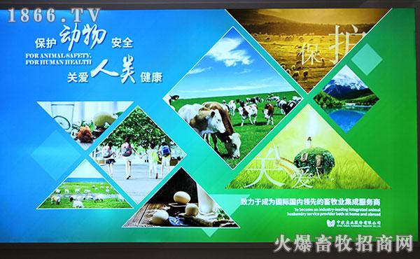 重磅!牧工商集团2019畜博会现场盛况火爆!