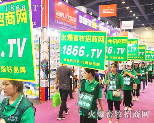 第31届中原畜牧会肆意张扬的火爆绿,亮眼醒目的1866.TV!