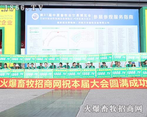 铮铮铁骨火爆人,2019中原畜牧会风采独特!