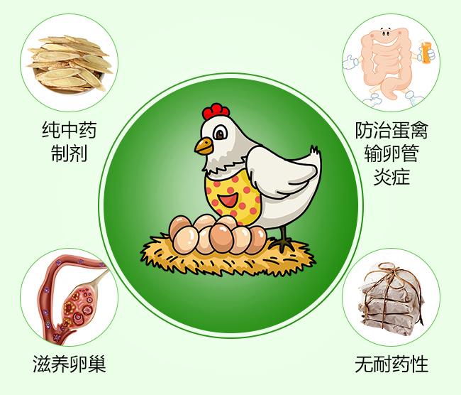 卵炎宁-补气养血,补肾壮阳,抗菌消炎