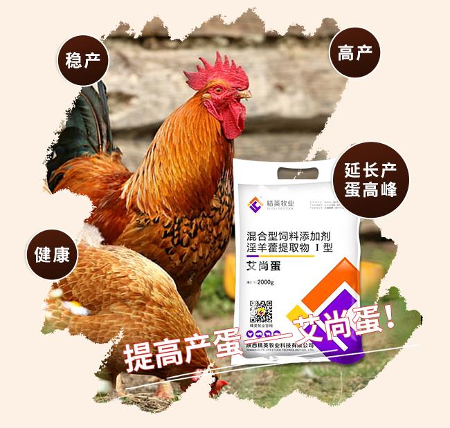 艾尚蛋-提高产蛋率、延长产蛋高峰、预防输卵管炎