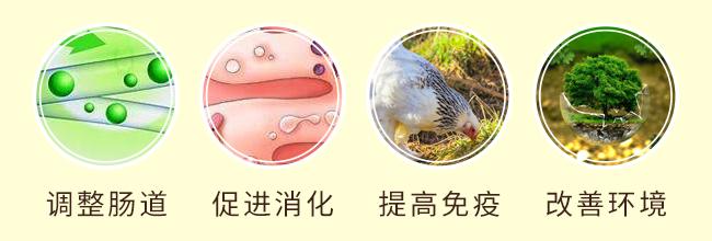 吉丹皇-主治家禽大肠杆菌、输卵管炎等