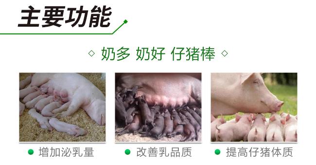 诸奶棒-优化肠道环境、保护免疫系统、改善母猪泌乳量