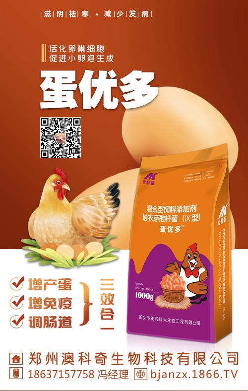蛋鸡产蛋率不高的原因分析及防治方案!