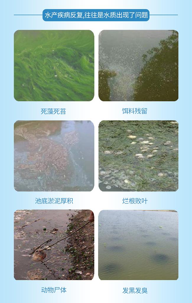 水产疾病反复,往往是水质出现了问题!