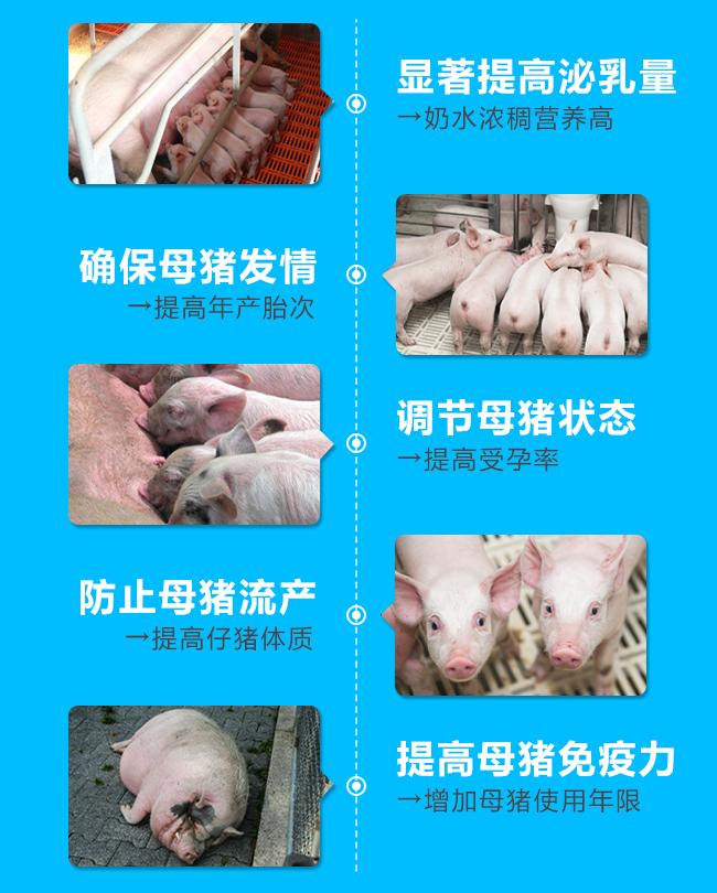 益姆王(母猪专用)-显著提高泌乳量