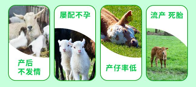 牛羊母仔康