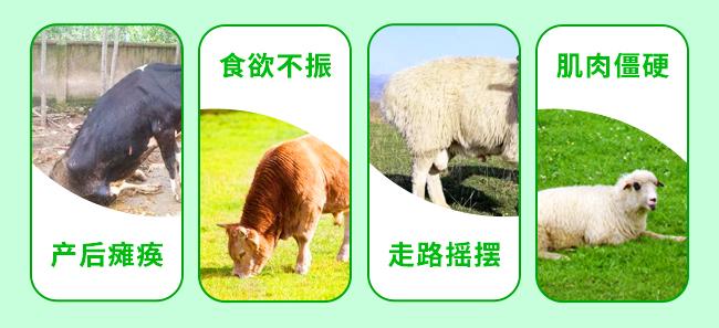 牛羊钙中钙