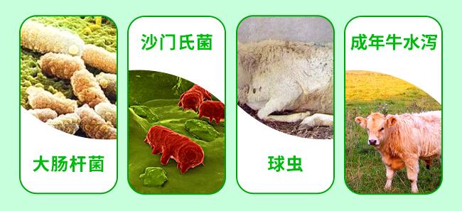 牛羊泻立停-502241_03