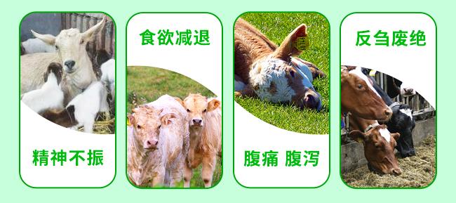 牛羊泻立停-502241_05