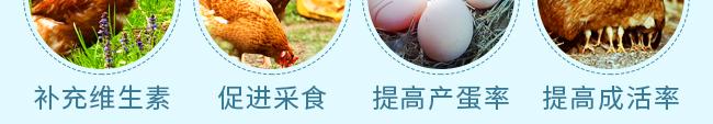 蛋禽专用多维-504800_10