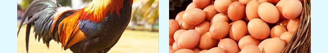 蛋禽专用多维-504800_13