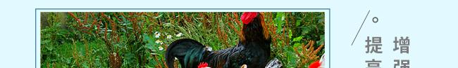 蛋禽专用多维-504800_16