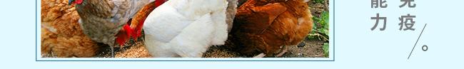 蛋禽专用多维-504800_18