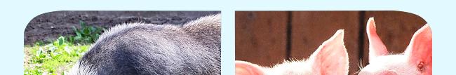肥壮美(猪牛羊专用催肥)-504804_12