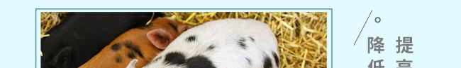 肥壮美(猪牛羊专用催肥)-504804_16