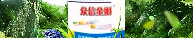 众信金刚-502964_06