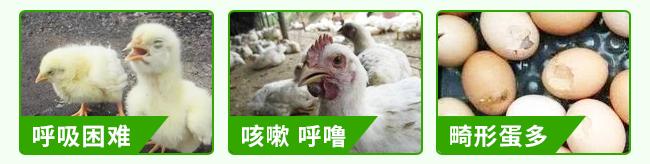 众信金刚-502964_12
