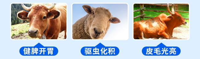 牛羊壮膘王(牛羊催肥)-324775_10