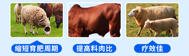 牛羊壮膘王(牛羊催肥)-324775_12