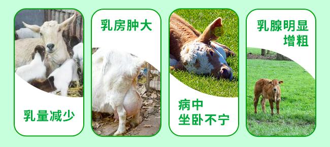 牛羊乳炎康