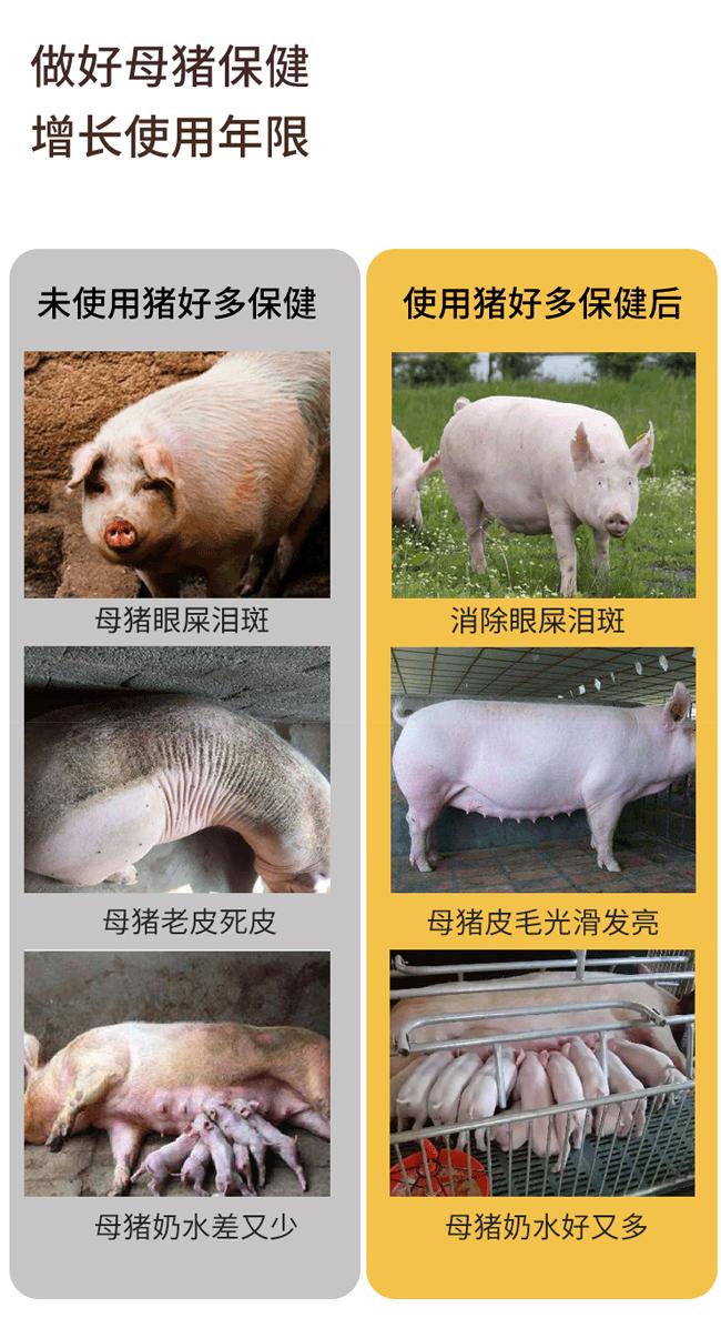 猪好多-消除母猪眼屎泪斑、老皮死皮等亚健康状态