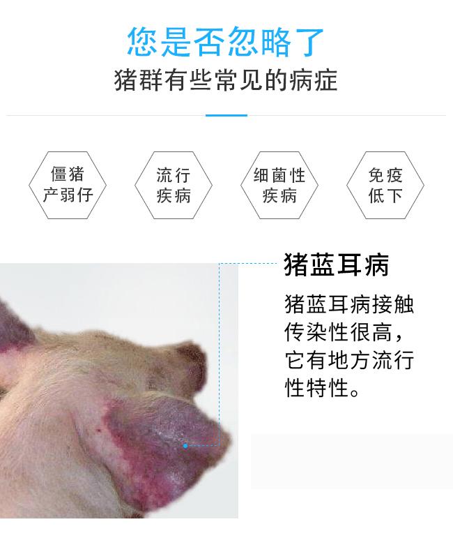 猪无忧-解僵猪、提高免疫力、减少发病、预防治疗所有猪群常见病