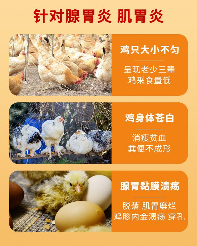 胃速康-禽类肌腺胃炎的治疗和预防