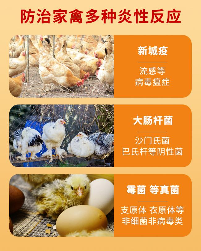 禽无忧-提高免疫力、减少发病、预防治疗所有禽类常见病