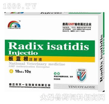 板蓝根注射液(原复活针)-风热感冒、肺热咳嗽防治用药