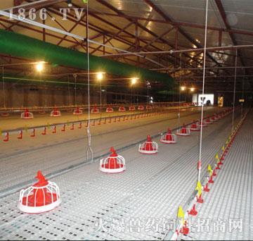 养殖禽用地板网床-富华