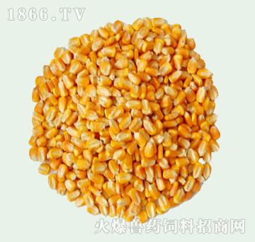 德诚-优质玉米
