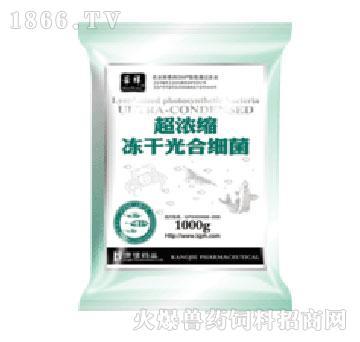 超浓缩冻干光合细菌-康