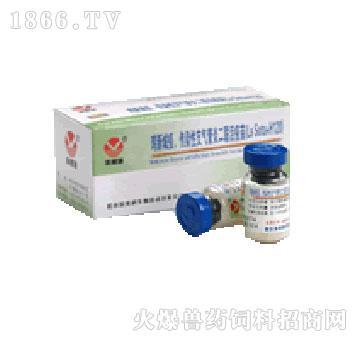 鸡新城疫、传染性支气管炎二联活疫苗(La Sota+H120)