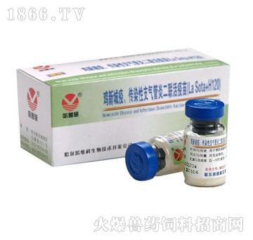 鸡传染性支气管炎活疫苗(H120株)