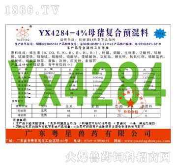 YX4284-4%母猪
