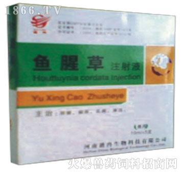 鱼腥草注射液-主治肺痈、痢疾、乳痈、淋浊