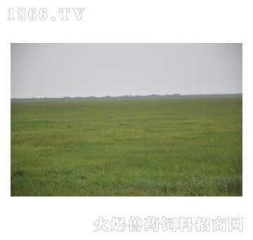 天然牧草羊草颗粒
