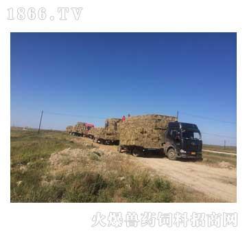 供应优质牛马羊牧畜牧草颗粒饲料