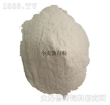 小麦蛋白粉